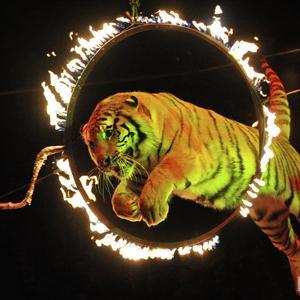Цирки Богородицка